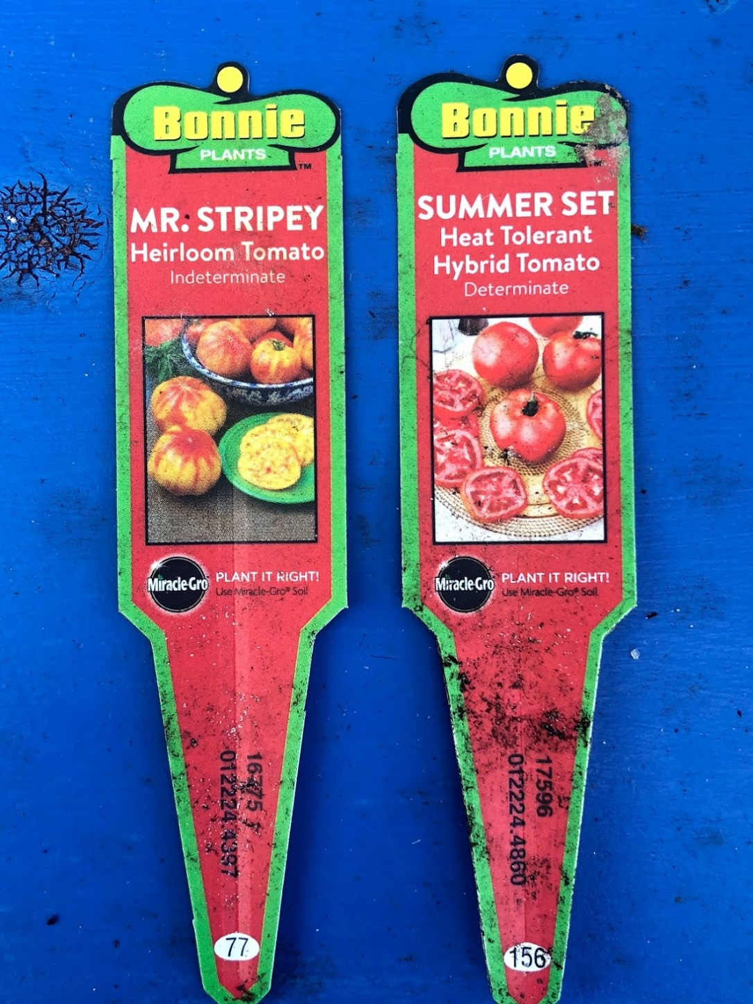 Failed tomato varieties: Mr. Stripe and Summer Set