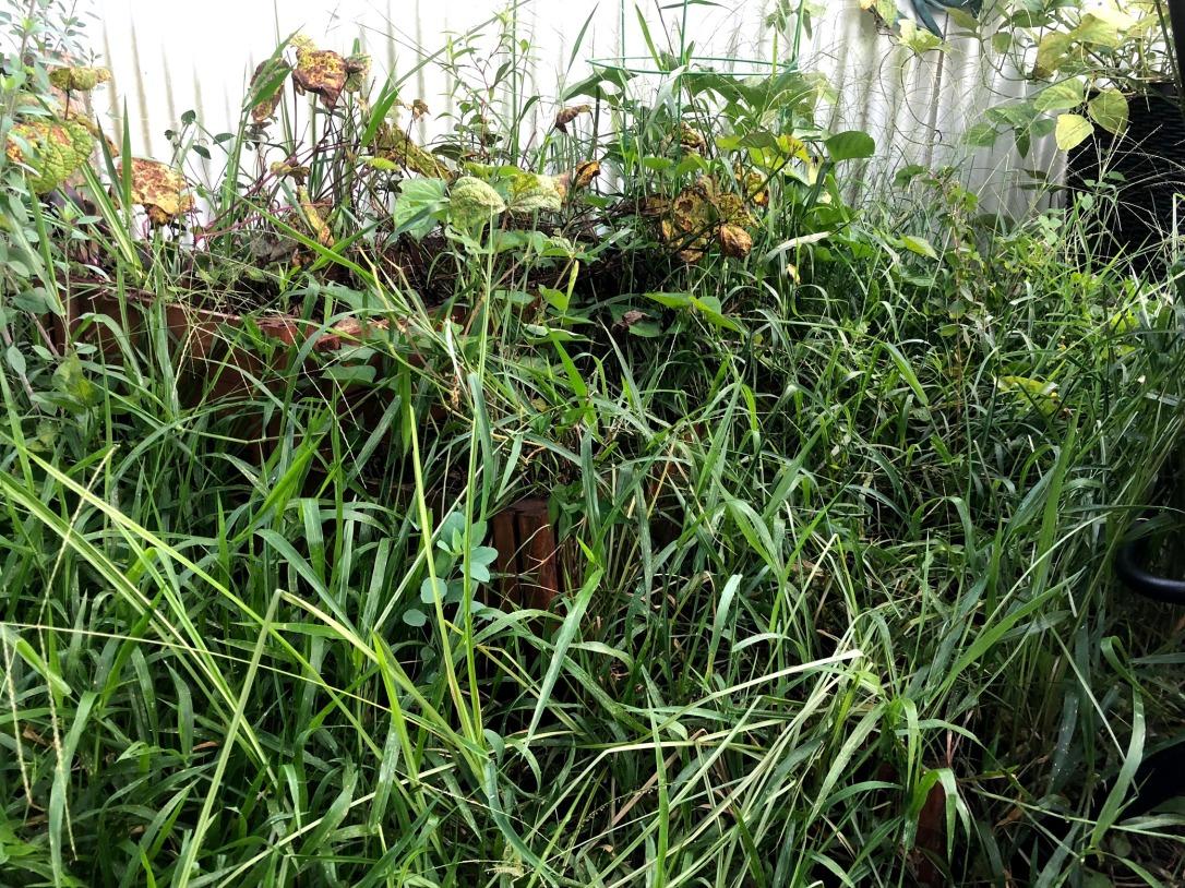pine mulch bed